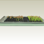 Fiber Glass Seedling Tray
